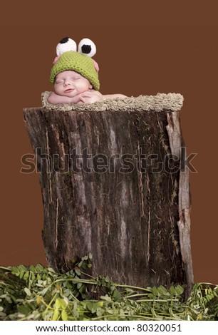 Little newborn tree frog - stock photo
