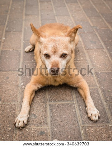 Little old dog resting on the street, selective focus - stock photo