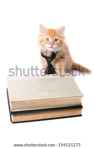 Little orange striped kitten wearing a tie with his paw on some text books - stock photo