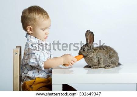 little pretty boy feeding rabbit with carrot - stock photo