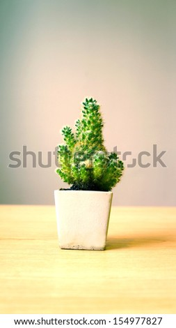 Little prickly cactus in a pot - stock photo