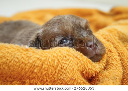 Little puppies playing in the yard  - stock photo