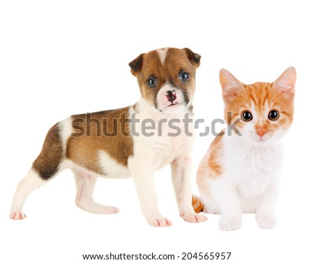 Little puppy and kitten isolated on white - stock photo