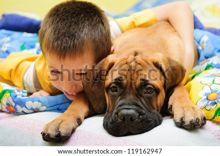 little puppy bullmastiff played with boy in the house - stock photo