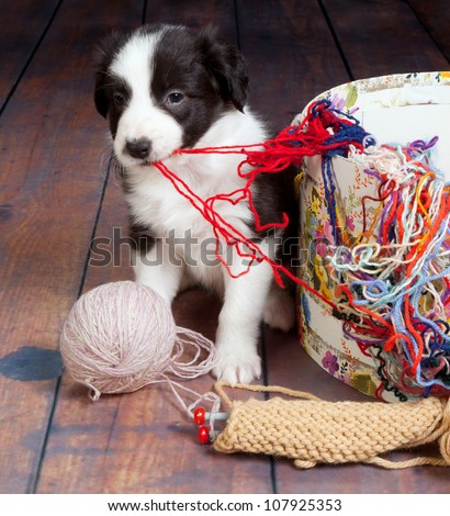 Little puppy dog making a mess of balls of wool - stock photo