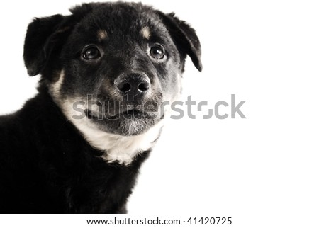 little puppy searching for something - stock photo