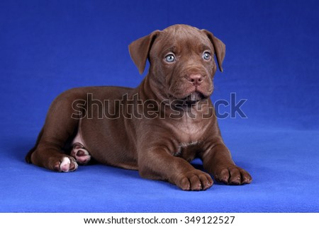 Little puppy with sad eyes - stock photo