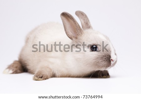 Little rabbit, Easter - stock photo