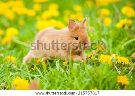 Little rabbit jumping on the flower field - stock photo