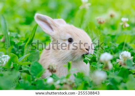 Little rabbit on green grass - stock photo
