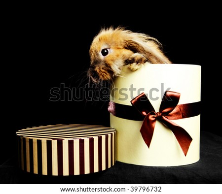 little rabbit sitting in the box for a present against dark background - stock photo