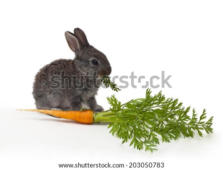 little Rabbit with carrot on white background  - stock photo