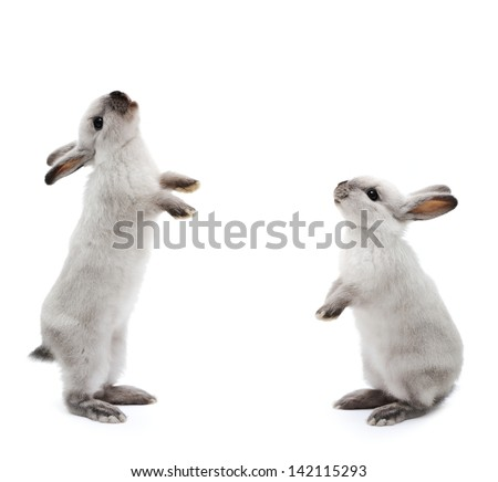 Little rabbits on white - stock photo