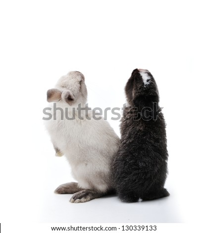 Little rabbits on white looking up - stock photo