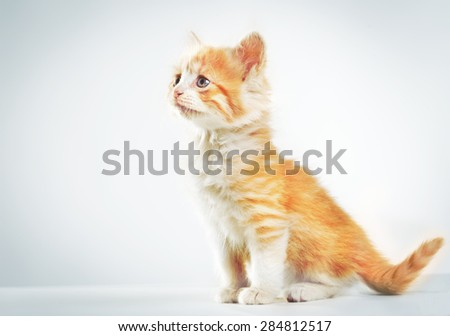 Little red fluffy kitten on a white background  - stock photo