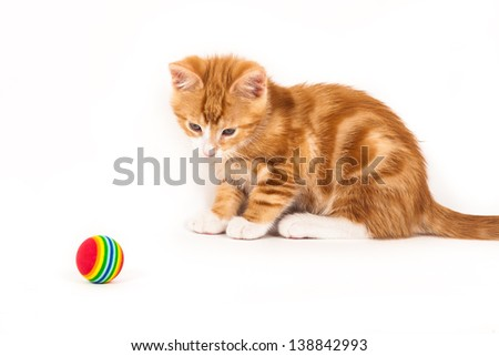 Little red kitten looking at ball, isolated on white background - stock photo