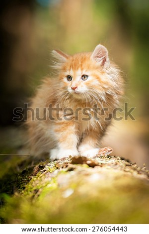 Little red kitten on the tree - stock photo