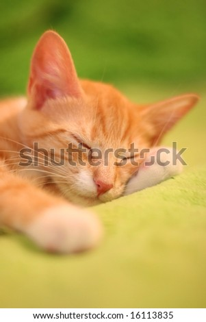 little red kitten sleeping on bed - stock photo
