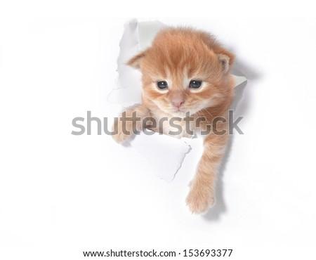 Little red kitten white paper hole - stock photo