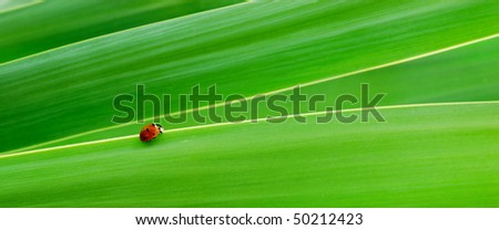Little red spotted Ladybird on bright green leaves - stock photo