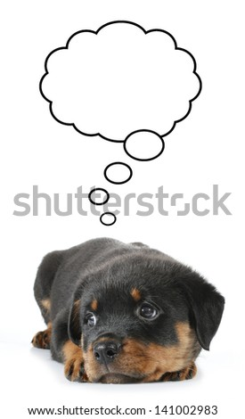 Little Rottweiler puppy dog lies down and thinking about something - stock photo