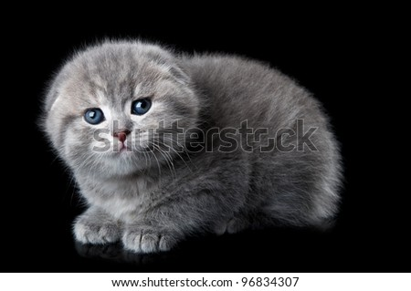 little scared kitten isolated on a black background - stock photo