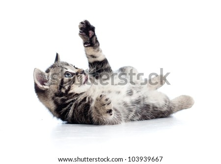 little Scottish black kitten lying on floor - stock photo