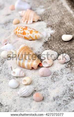 little seashells on the sand on wooden background - stock photo
