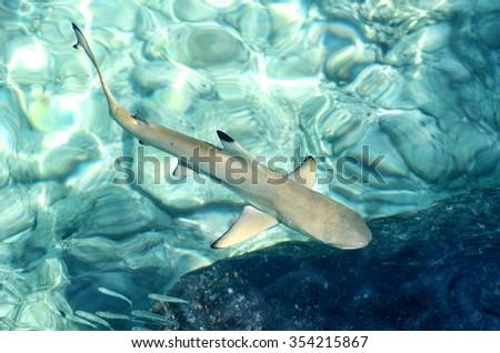 Little Shark - stock photo