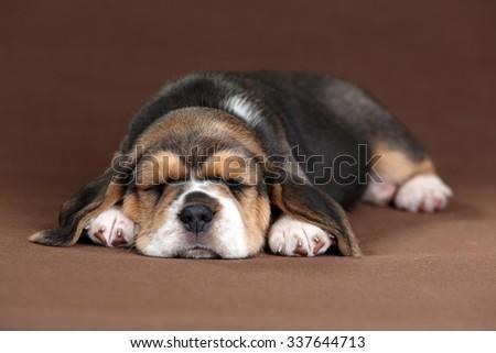 Little sleep puppy - stock photo