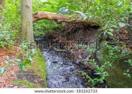 Little stream through Marlay Park Dublin Ireland - stock photo
