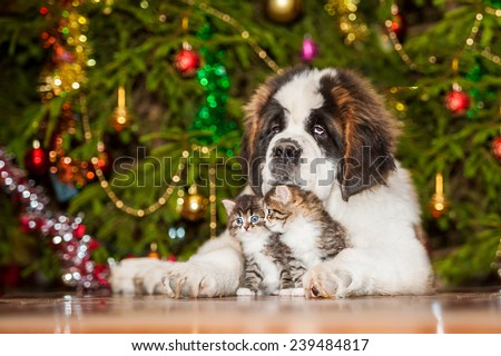 Little tabby kittens with saint bernard puppy sitting near a christmas tree - stock photo