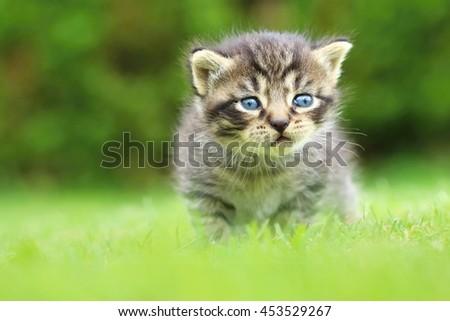 Little tabby kitty - stock photo