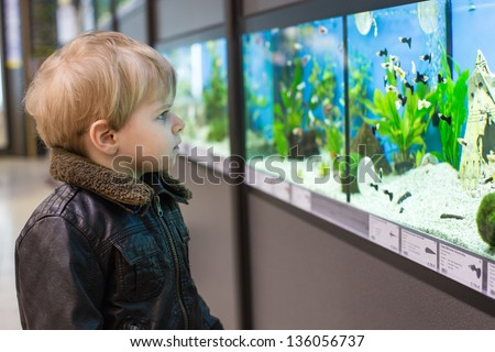 Little toddler boy watches fishes in aquarium - stock photo