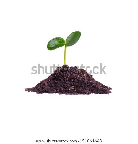 little tree - stock photo