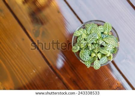 Little tree on table - stock photo