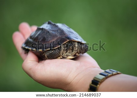 Little Turtle in a hand. - stock photo