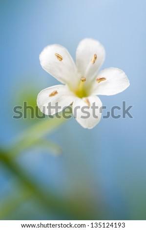 little white flower for background - stock photo