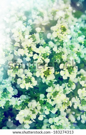 Little white flowers, floral background. Spring background, - stock photo