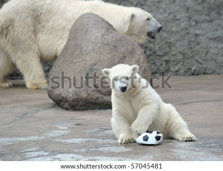 Little white polar bear with soccer ball - stock photo
