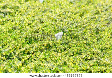 little yellow flowers green leaves and butterfly - stock photo