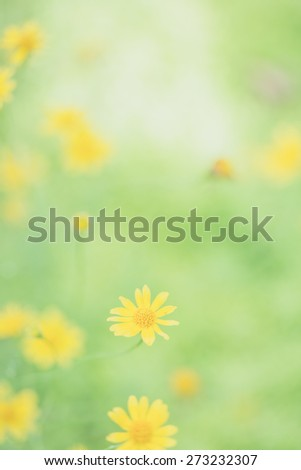 Little yellow star flower in soft focus - stock photo