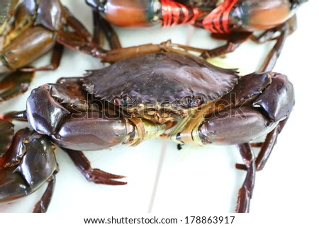 Live Crabs ready to be cooked in a market  - stock photo