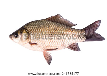 Live fish crucian on a white background - stock photo