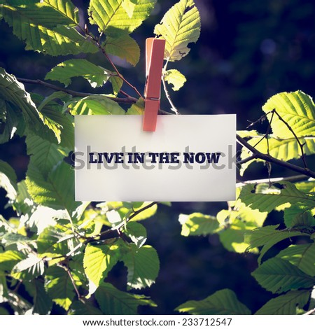 Live in the now message on a white card or sign hanging by a clothes peg from a green leafy branch outdoors, toned retro effect. - stock photo