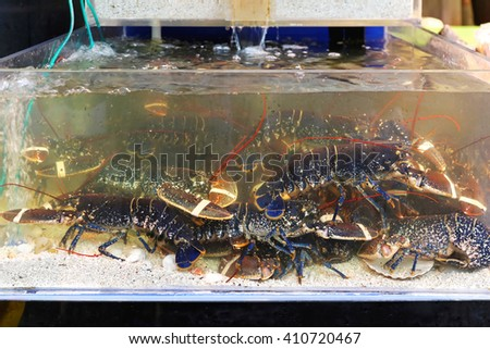 Live lobsters in tank at market - stock photo