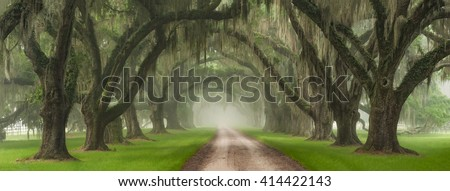 Live Oak Tree Tunnel Over Southern Plantation Entrance Outside Of Charleston South Carolina    - stock photo