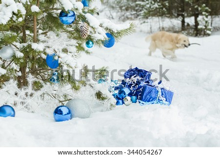 Live snowy pine tree decorated with Christmas ornaments and golden retriever dog is carrying wooden stick  - stock photo