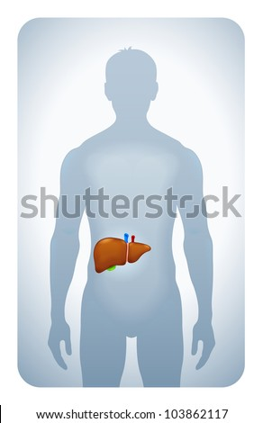 liver highlighted on the silhouette of a man - stock photo