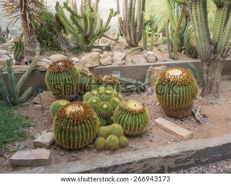 Living Desert Zoo and Gardens State Park is a zoo and botanical garden displaying plants and animals of the Chihuahuan Desert in their native habitats.  - stock photo